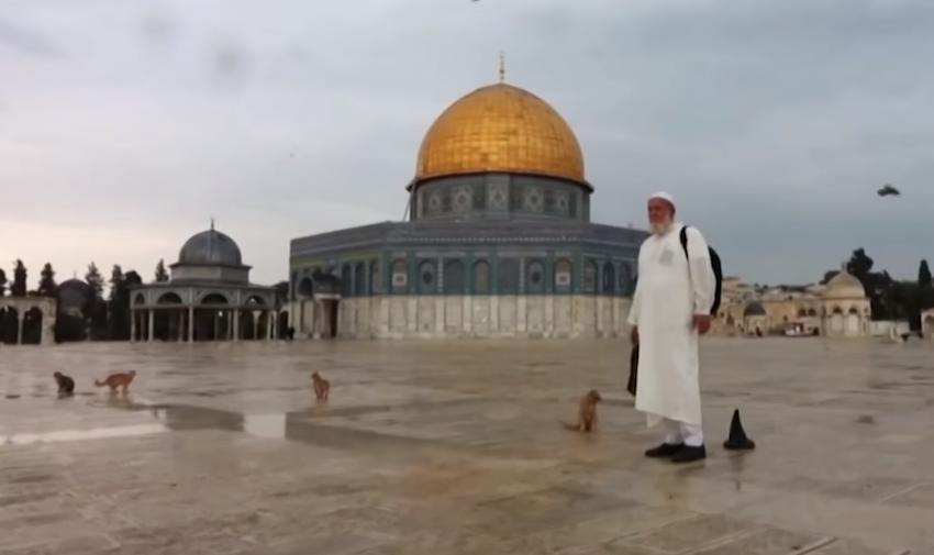 Historia e besimtarit që prej 20 vitesh ushqente kafshët në sheshin e xhamisë