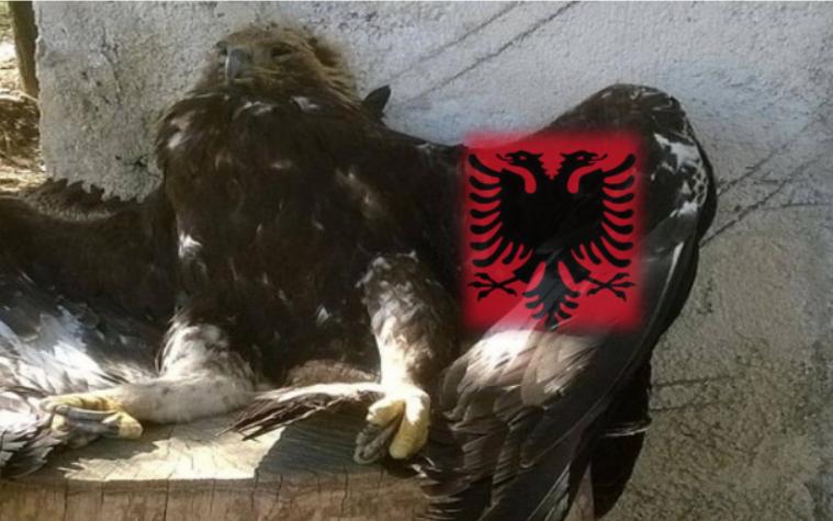 Si po qëllohet me armë shqiponja e malit, simboli ynë kombëtar…
