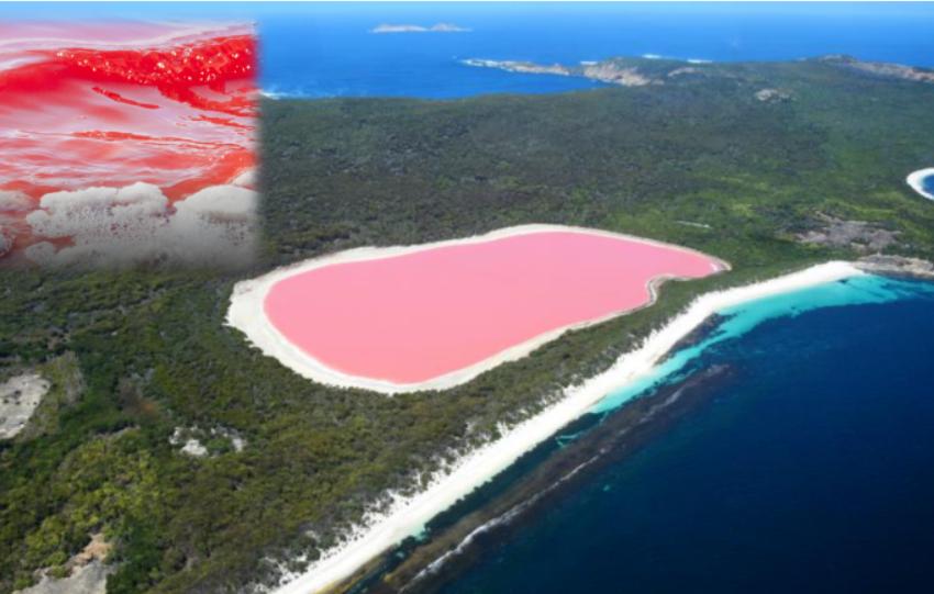 Bukuritë e natyrës,  shikoni këto pamje të liqenit rozë në Australi