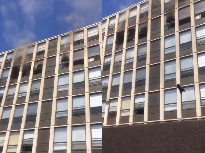 Zjarrfikësit publikojnë videon e pazakontë… edhe 6 jetë të mbetura!