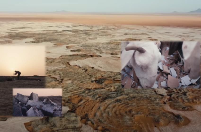 """""""Kafshëve po u japim karton për të ngrënë"""" Jetesa nën 'këmbët' e shkretëtirës"""